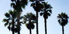 Venice Beach in Los Angeles, California. Picture / Babiche Martens.