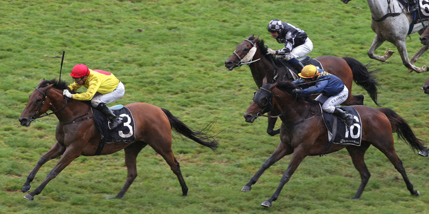 Decorah draws away in the $200,000 City Of Auckland Cup at Ellerslie yesterday. Photo / Trish Dunell
