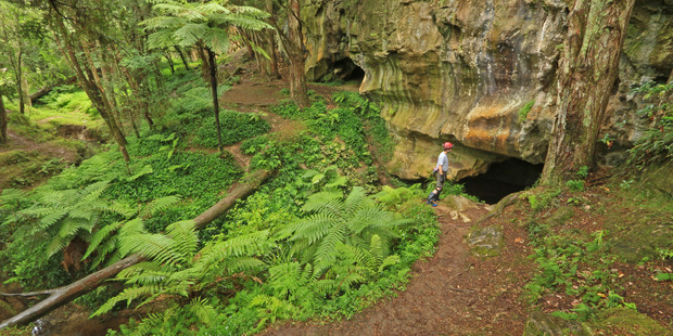 Visiting Waipu Caves is like taking a trip into another world. Photo / Supplied