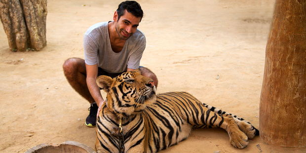 A man poses with a tiger cub at the Tiger Temple in Thailand, which has faced accusations of exploitation. Photo / 123RF