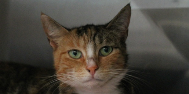 Dory is loving, smart and affectionate.