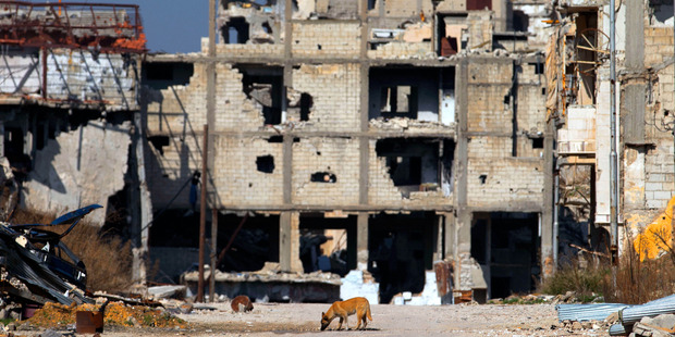 A dog drinks water between destroyed buildings in the old city of Homs , Syria. Photo / AP