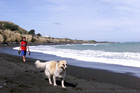 Dogs will have to be under proper control on Ngawi reserves. PHOTO/FILE