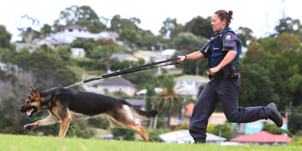 Constable Elyse Lewis and Mist on the run in Northland. Photo / Michael Cunningham