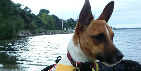 Council's 'spokesdog' Alfie will be in Omokoroa this Saturday for the Doggy Day Out.