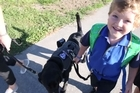 """For the Stephenson family, safety fears and unpleasant looks were a big part of life because their  5-year-old autistic boy could wander off or have a tantrum-like meltdown any time. But now, thanks to a $20,000 fundraising effort, young Tom of Auckland's Red Beach has an assistance labrador, Libby, making an """"amazing"""" difference to family life."""