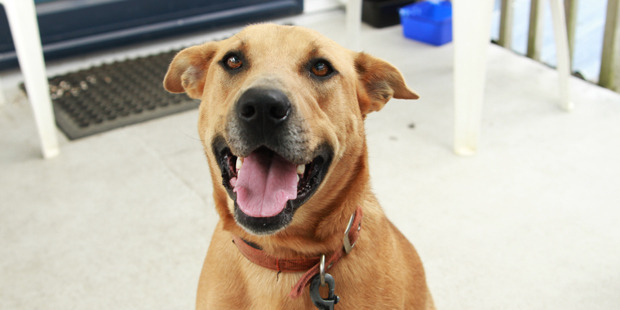 Kandi is a friendly, bouncy young dog.