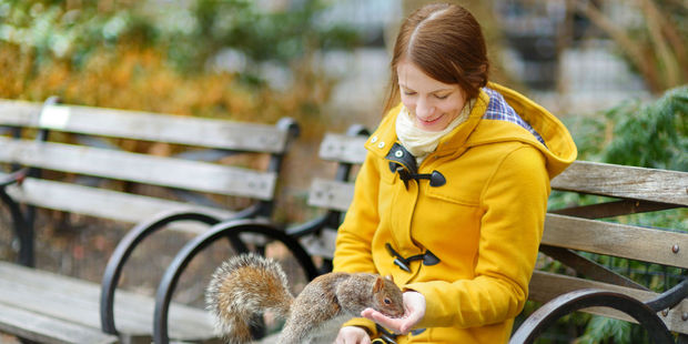 """Tourists warned of the """"terrifyingly bold"""" squirrels in New York City. Photo / 123RF"""