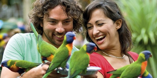 Get close to nature at Currumbin Wildlife Sanctuary. Photo / Tourism and Events Queensland
