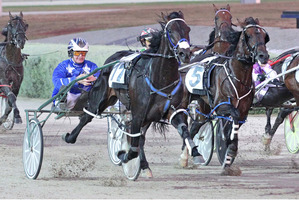 Lazarus has drawn barrier two in Friday's Northern Derby classic at Alexandra Park. Picture / Stuart McCormick