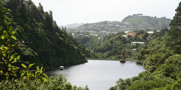 Wildlife sanctuary Zealandia could soon become controlled by the Wellington City Council. Photo / Mark Taylor