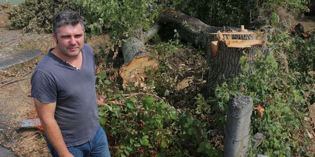 Ian Farley stands beside the stumps of three oak trees that were felled to make room for the expansion of the Greytown Fire Station. PHOTO/HAYLEY GASTMEIER