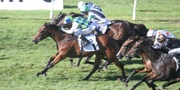 Rangipo (No 1) wins a tightly fought BMW NZ Derby at Ellerslie on Saturday. Photo / Trish Dunell