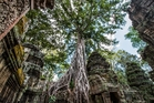 Cambodia's Ta Prohm temple is almost swallowed by the jungle. Photo / 123RF
