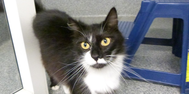 Bonnie is looking for a home where she can relax in the sun.