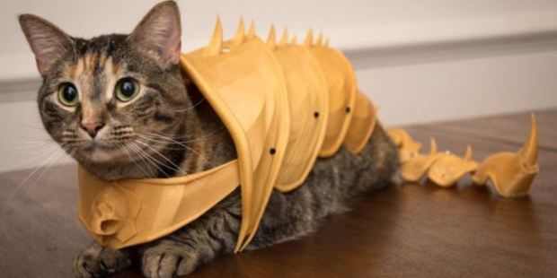 This moggy is ready for battle. Photo / Andrew Sinks, Sink Hacks