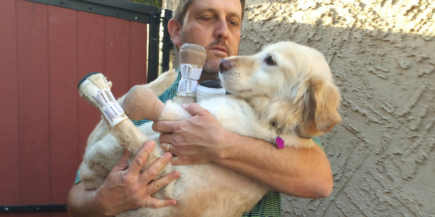 Richard Howell carries Chi Chi, a golden retriever mix, at his home in Phoenix. Photo / AP