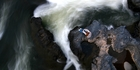 A tramper studies the rapids on the Whakapapa River near Owhango. Photo /  Amos Chapple