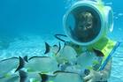 Surrounded by fish on the Aquablue lagoon walk in Tahiti. Photo / Pamela Wade