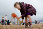 Rose Parkman, 6, working hard with her spade at The Hits Beach Dig. Photo / Stephen Parker