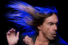 Now there's this, an Iggy Pop album that sounds like Iggy at his best. Photo / AP