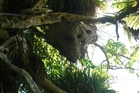 Several campers had been stung by wasps from the Mini car-sized nest hanging about 7m off the ground in a puriri tree.