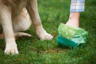 The amount of dog manure in this area is appalling. Pure laziness. Photo / iStock