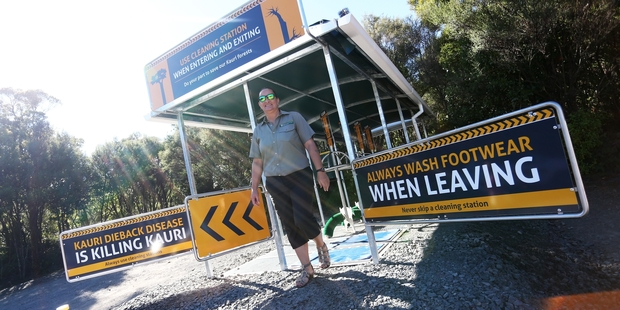 Kauri Coast operations manager Diane Sanderson at the entrance to Te Matua Ngahere track, where all visitors have to walk through a new footwear cleaning station. Photo / Michael Cunningham