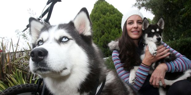 "Greytown Siberian huskies Zara, 2, and Teeko, 9 weeks, with owner Tania Hastelow, who is training her huskies to pull her ""sleigh"", a modified bicycle. PHOTO/ANDREW BONALLACK"