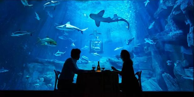 Guests can enjoy a romantic dinner surrounded by sharks. Photo / Airbnb