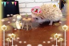 One of the prickly residents of the Harry Hedgehog Cafe. Photo / Facebook, Harry Hedgehog Cafe