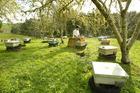 Beekeeper David Yanke with some