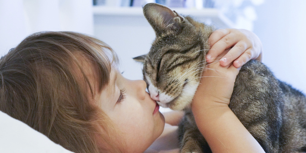 Cats are just as lovable as dogs. Photo / Thinkstock