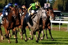 Maygrove (grey) is the 60kg topweight in the Hawke's Bay Gold Cup tomorrow. Photo / Race Images