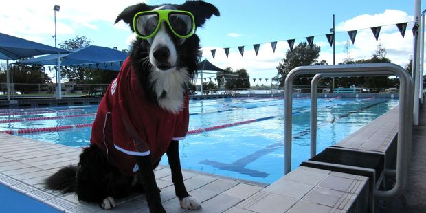 Jax, owned by Memorial Aquatics manager Letitia Jackson, is all kitted up ready for some Sunday swimming action. Photo/Supplied