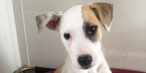 Jack is a cheerful puppy who loves to be the centre of attention.