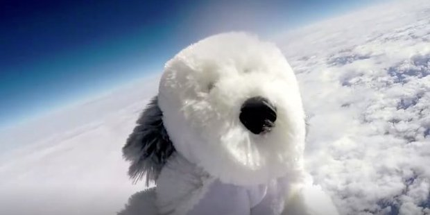Pupils at a school in Lancashire have sent a cuddly toy dog 24km into the atmosphere as part of a science project. Photo / Supplied