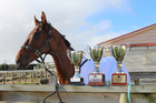 Rising 10-year-old Intransigent with his spoils after trainer Kirsty Lawrence retired him at her stables in Pukurau.