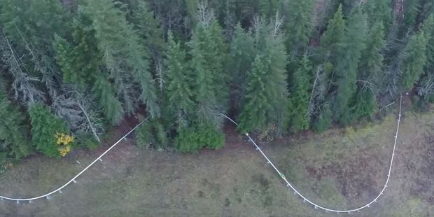 The Pipe Mountain Coaster twists and turns through the forest. Photo / Revelstoke Mountain Resort, YouTube