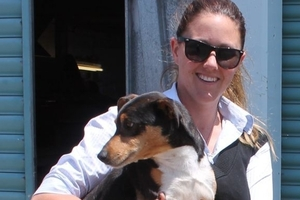 Laura Phillips, Dannevirke SPCA manager and inspector in training, believes banning certain breeds isn't the answer to preventing dog attacks.
