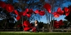 Watch: Creating poppies for Anzac Day