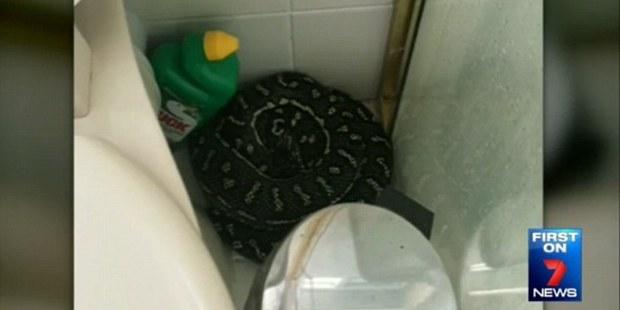 Loading Oh hello, nightmare. The harmless snakes often seek shelter inside. Photo / Seven News
