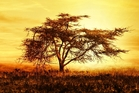 A beautiful Kenyan sunset. Photo / 123RF