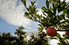 Changing weather over an apple orchard on St Georges Rd, Hastings. Photo / Warren Buckland
