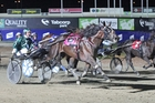 Speeding Spur has a tricky race in the Anzac Cup. Photo / Harness Racing Victoria