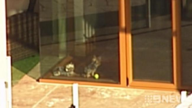 FLASHBACK: Johnny Depp's dogs Boo and Pistol in the window at Mick Doohan's house. Photo / Nine News