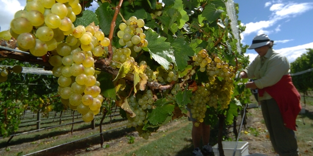 New Zealand's cool-climate wine styles are favoured in most major markets. Photo / John Cowpland