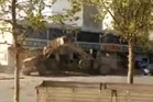 In online video taken Saturday, several bulldozers are seen ramming each other while passenger cars scurry away from the cloud of dust. Photo / YouTube
