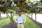 """Orchard sales in the Western Bay of Plenty have jumped as demand for kiwifruit blocks outstrips supply with one agent describing it as """"a land grab""""."""