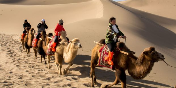 A group of tourists are riding camels in the desert at Dunhuang City in China.